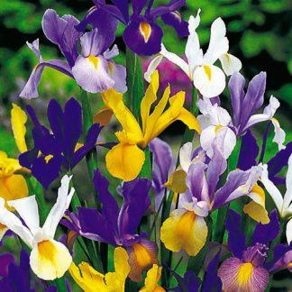 Iris mix.